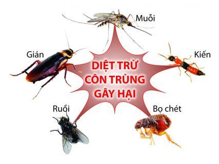 Diệt côn trùng gây hại Ruồi Muỗi Kiến Gián