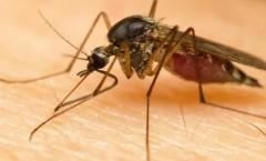 Phun diệt muỗi ở Đồng Nai
