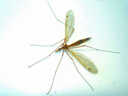 Phun muỗi đồng nai - Giá rẻ