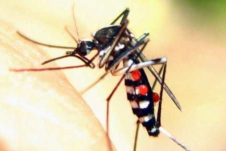 Công ty diệt muỗi Long An